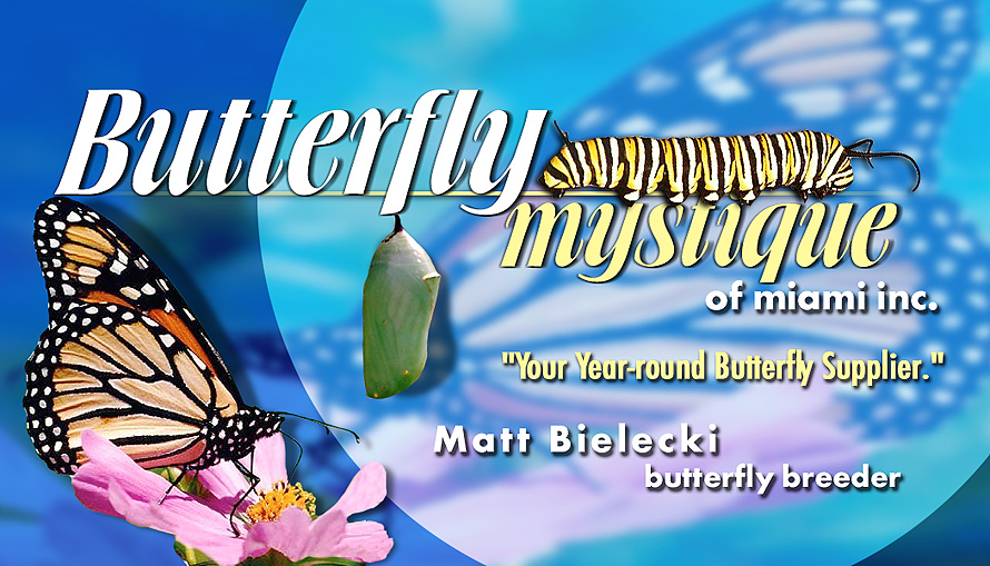 Butterfly Mystique of Miami Inc.
