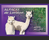 Alpacas de Loralon - Agriculture and Farming Graphic Designs